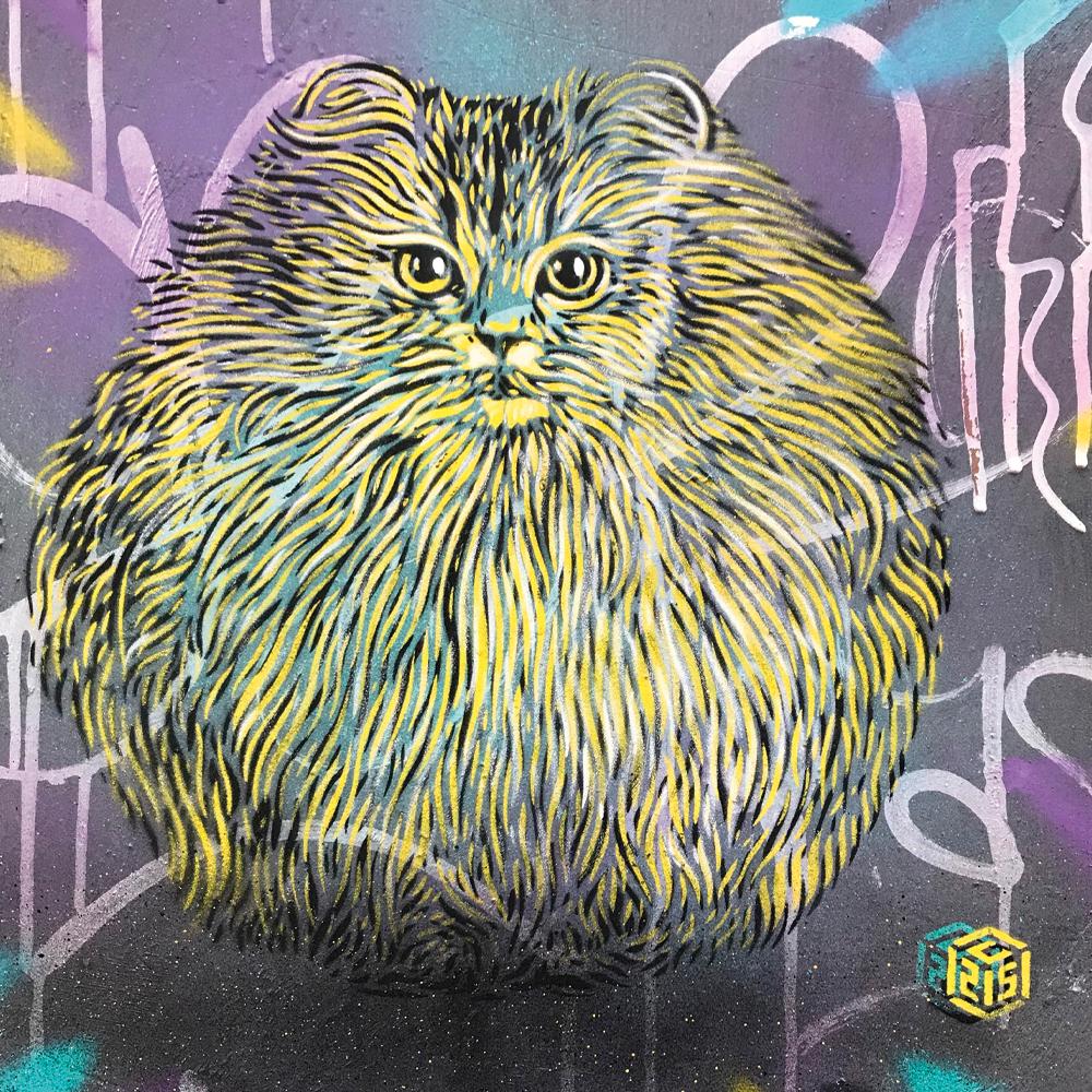 gatto c215